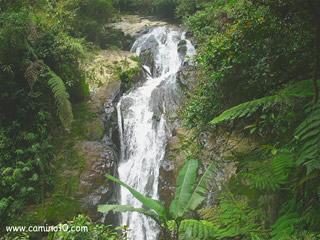 Wasserfall in den Cameron Highlands